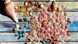 桜貝の聖地~藤沢・片瀬江ノ島海岸でビーチコーミング
